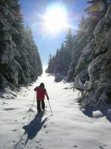 Ski de fond dans la Pinatelle